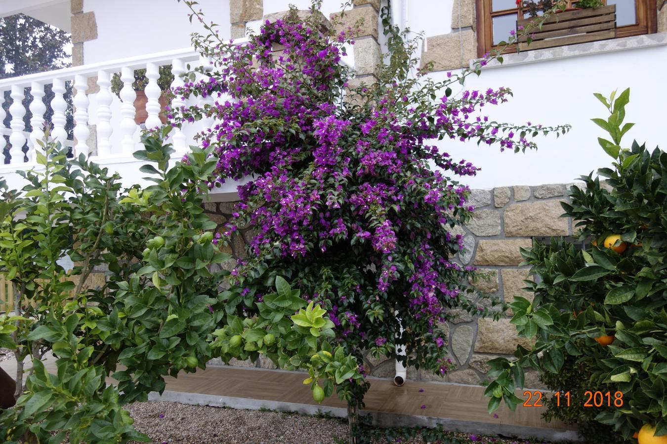 la-rosa-del-valle-066